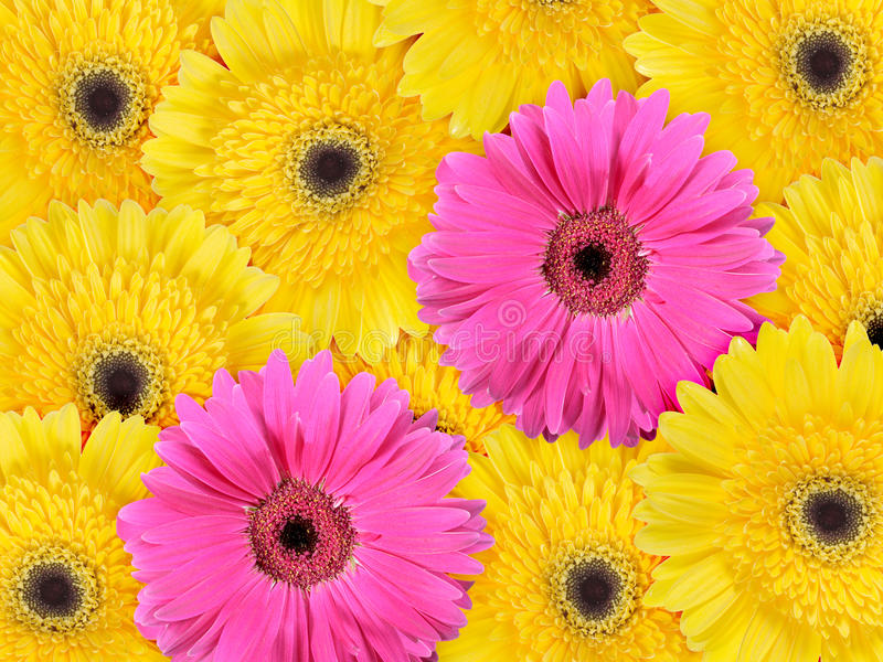 Abstract background of yellow and pink flowers stock image image download abstract background of yellow and pink flowers stock image image of nature bouquet mightylinksfo