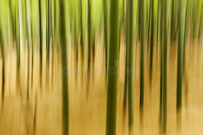 Download Abstract Bamboo Plants stock photo. Image of japan, texture - 29159590