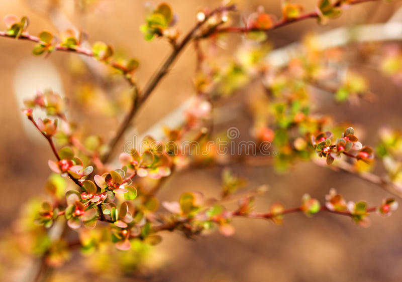 Abstract barberries background royalty free stock image