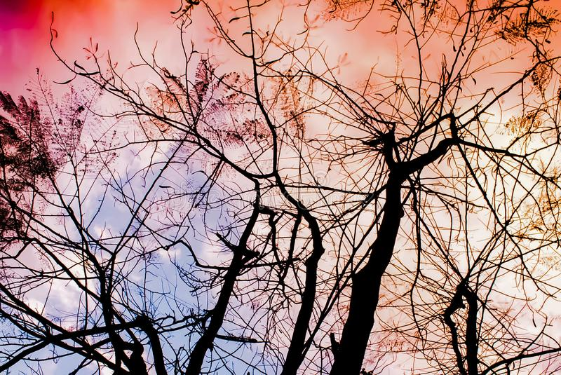 Abstract bare tree branches, sky sunset, bare branches of a tree. At sunset, bare branches of a tree at sunset stock image