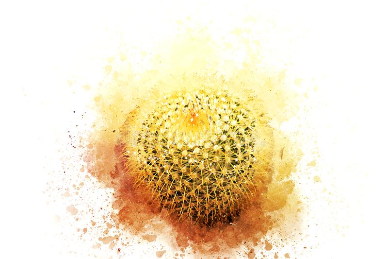 Abstract Beautiful cactus flower watercolor painting stock illustration