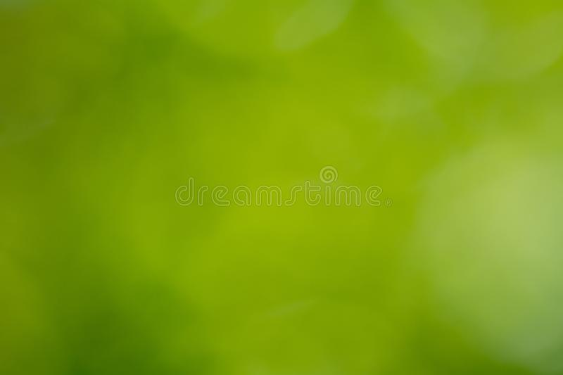 Beautiful natural deep green gradient background royalty free stock photography