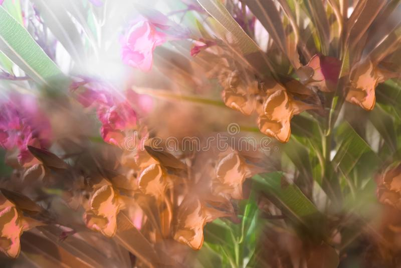 Abstract beeld van bloemen in het park royalty-vrije stock afbeelding