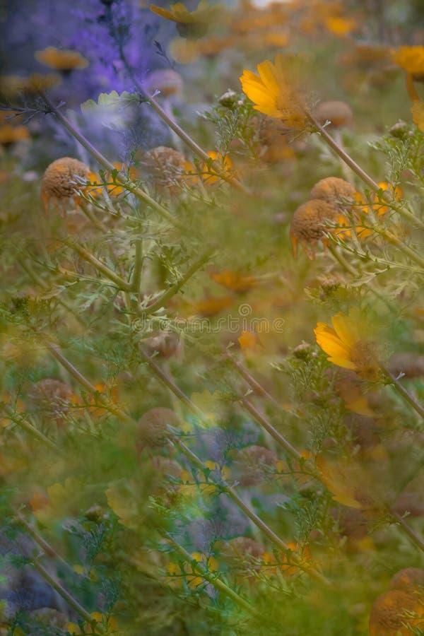 Abstract beeld van bloemen in het park royalty-vrije stock fotografie