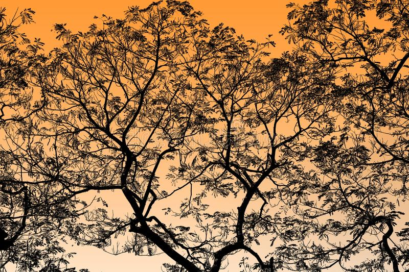 Abstract Black Tree Branches on background Orange, Yellow, gold highlight royalty free stock images