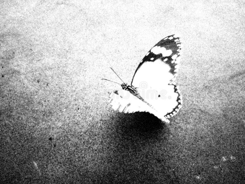 Abstract black and white butterfly textured background. vector illustration