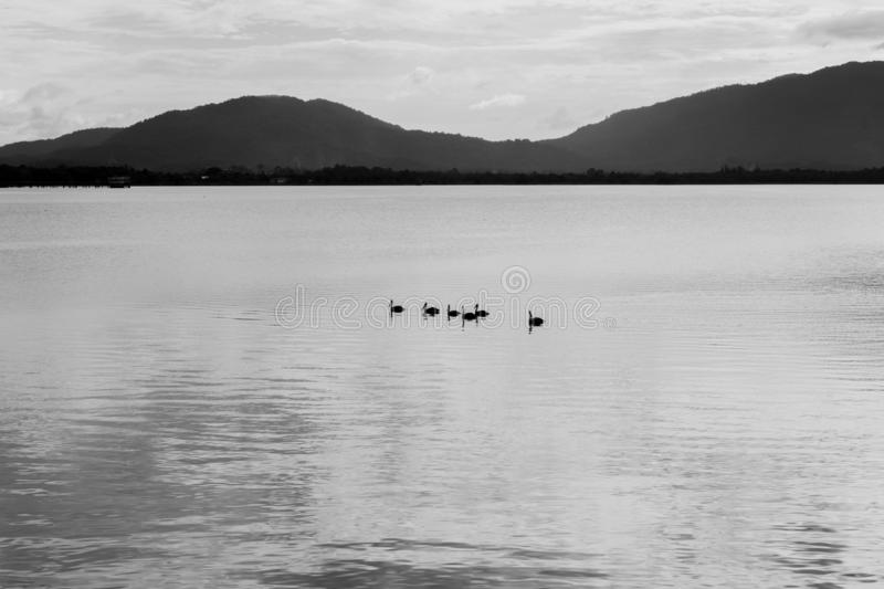 Abstract black and white image on birds on lake and mountain background. The Abstract black and white image on birds on lake and mountain background royalty free stock image