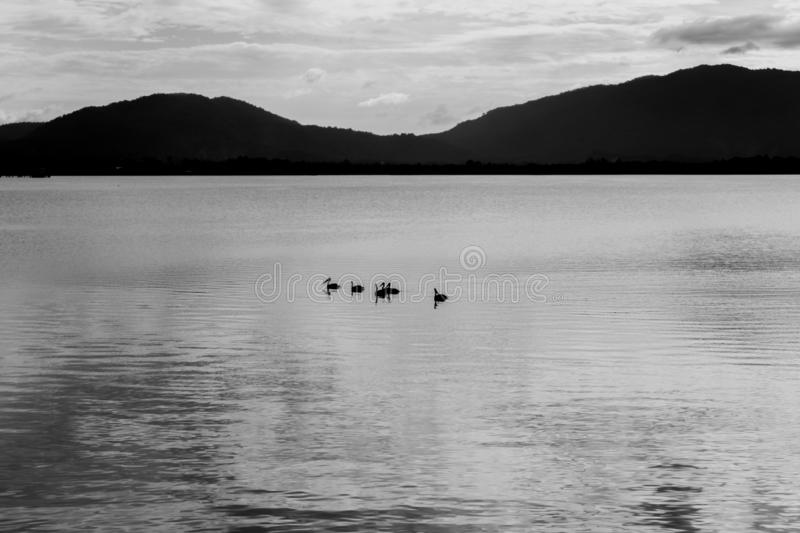 The Abstract black and white image of birds on lake and mountain background. Abstract black and white image of birds on lake and mountain background royalty free stock photos