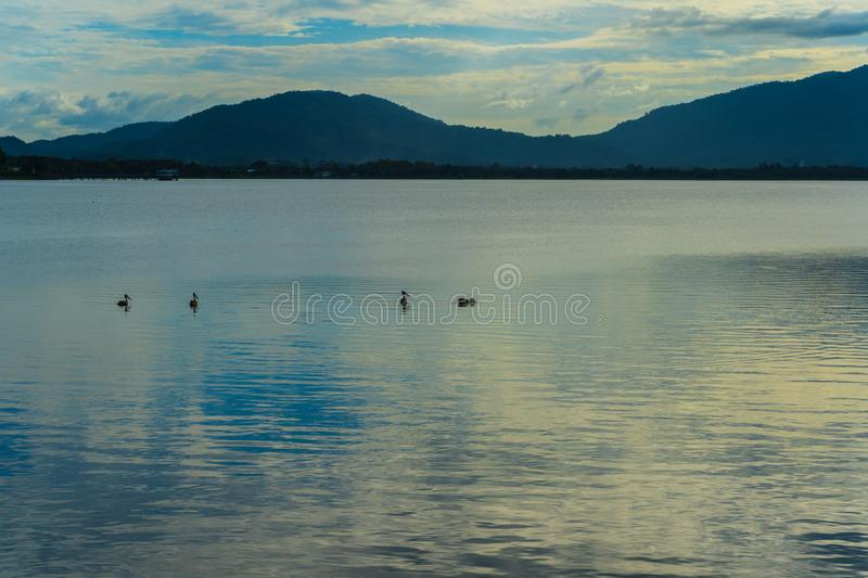The Abstract black and white image on birds on lake and mountain background. Abstract black and white image on birds on lake and mountain background stock image