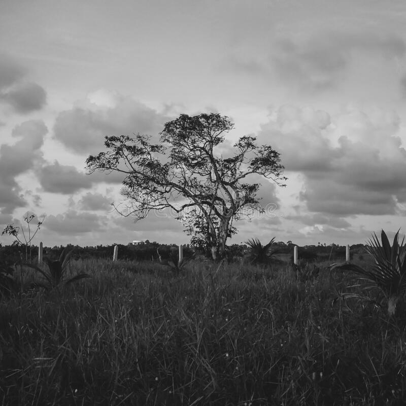 Abstract Black And White Landscape With Lonely Tree. Stock