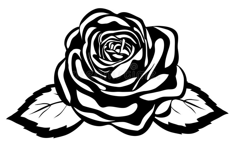 Abstract black and white rose. Close-up isolated vector illustration