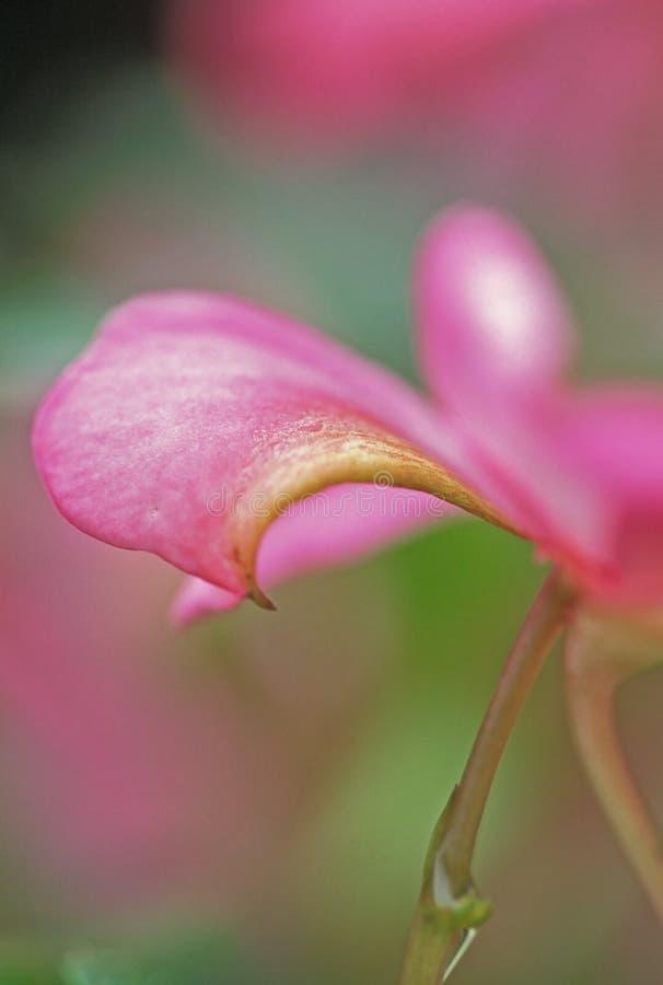 Abstract bloemblaadje royalty-vrije stock fotografie
