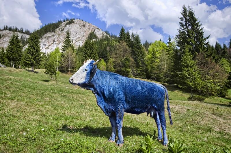 Abstract blue cow on pasture. Concept of genetic modified animals stock photography