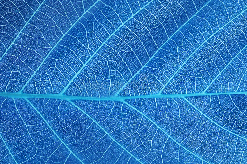 Abstract blue leaf background royalty free stock photos