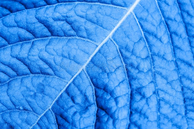 Abstract blue leaf macro for background royalty free stock photography