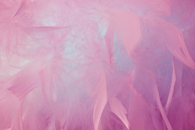 Abstract blue tone feathers background. Fluffy feather fashion design vintage bohemian style pastel texture. Abstract beautyful pink and blue tone feathers stock photos