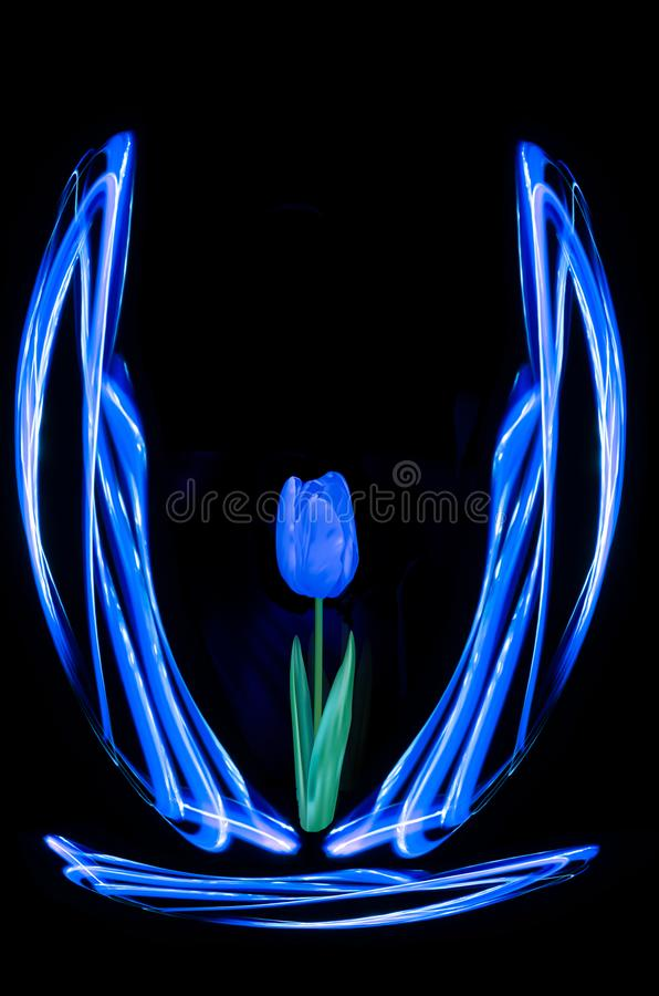 Abstract blue tulip flower vase royalty free stock image