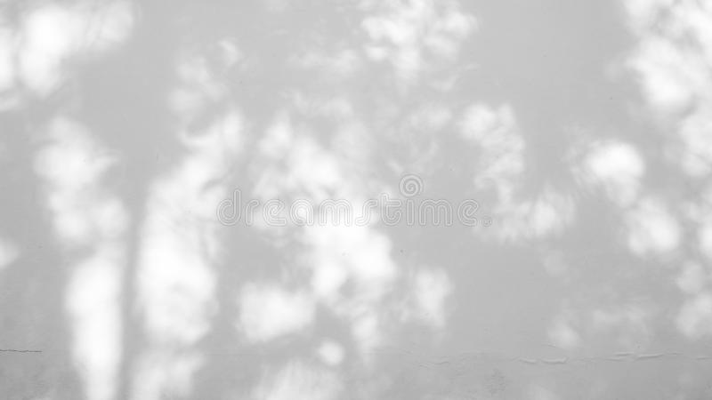 Abstract blur background, blurred gray shadow of leaves from a tree on white color concrete surface cement wall stock photography