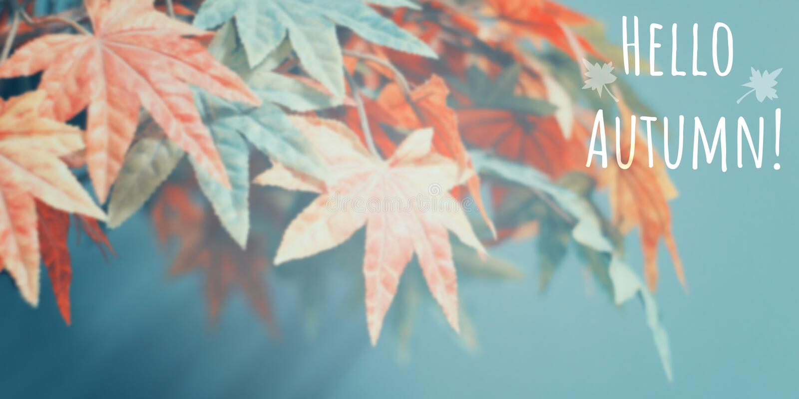 Abstract blur background of colorful maples royalty free stock image