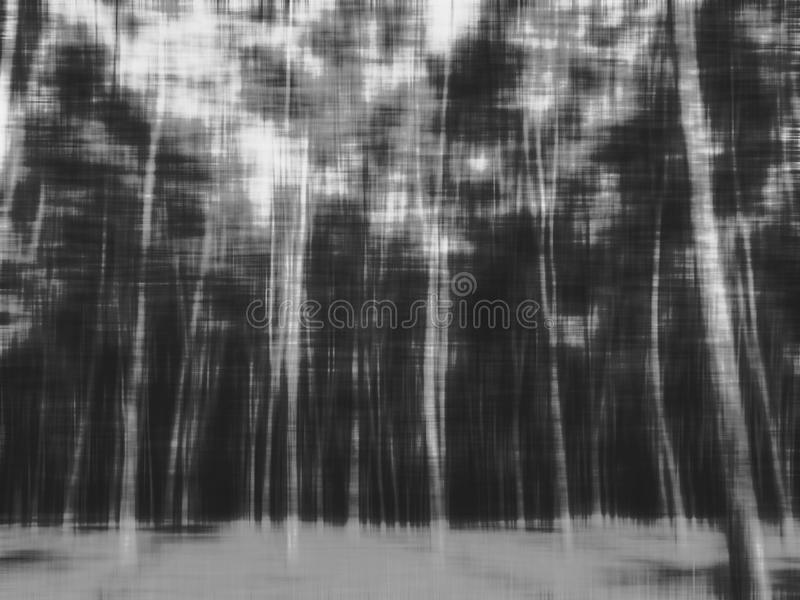 Abstract blur forest for halloween background. Black and white color stock photo