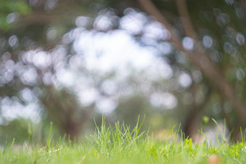 Abstract blur green exercise park in spring outdoor background concept for blurry beautiful nature field, horizon autumn meadow sc stock photo
