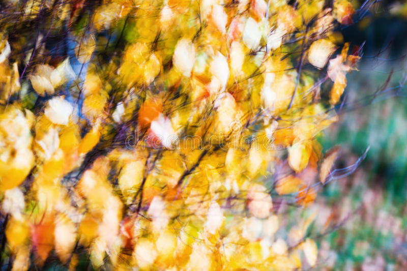 Abstract blur of autumn leaves royalty free stock image