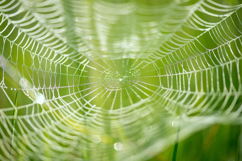 Abstract blur of a spider net over green background stock photography