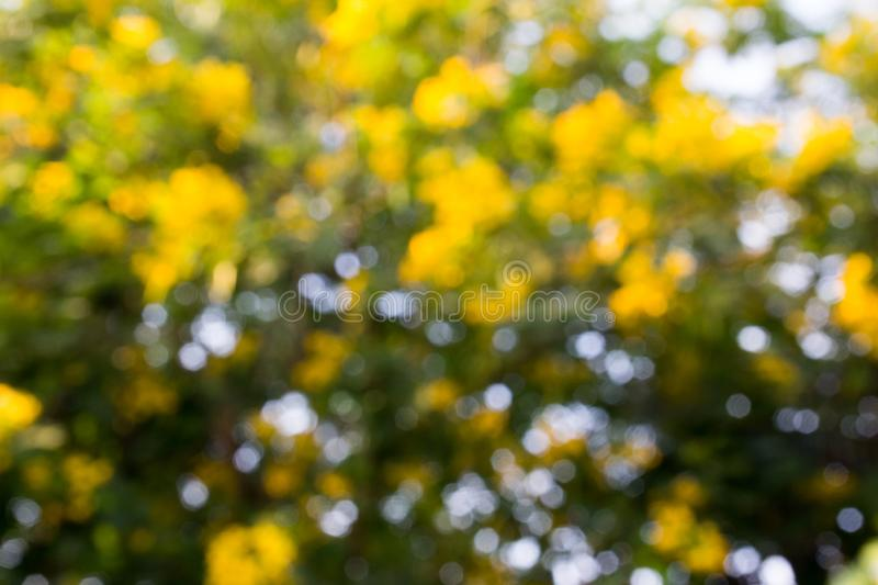 Abstract blur yellow, green and white color bokeh background stock images