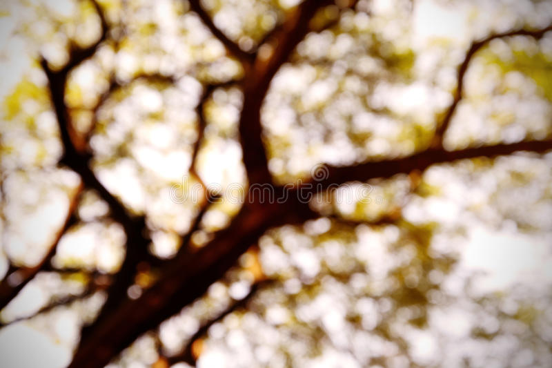 Abstract Blurred background from nature. With soft light royalty free stock photo
