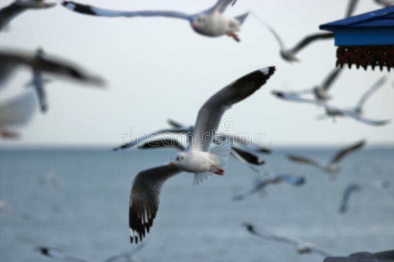 Abstract blurred of flock of seagulls flying in the sky Science name is Charadriiformes Laridae . stock images