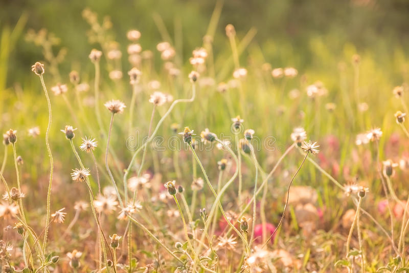 Abstract blurred of flower grass at relax morning time stock images