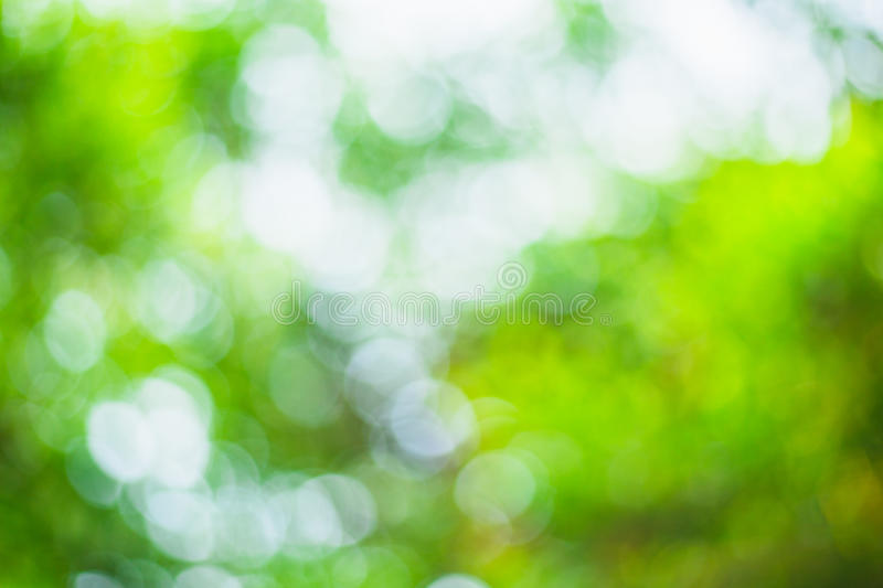 Abstract blurred green bokeh leaves background royalty free stock photo