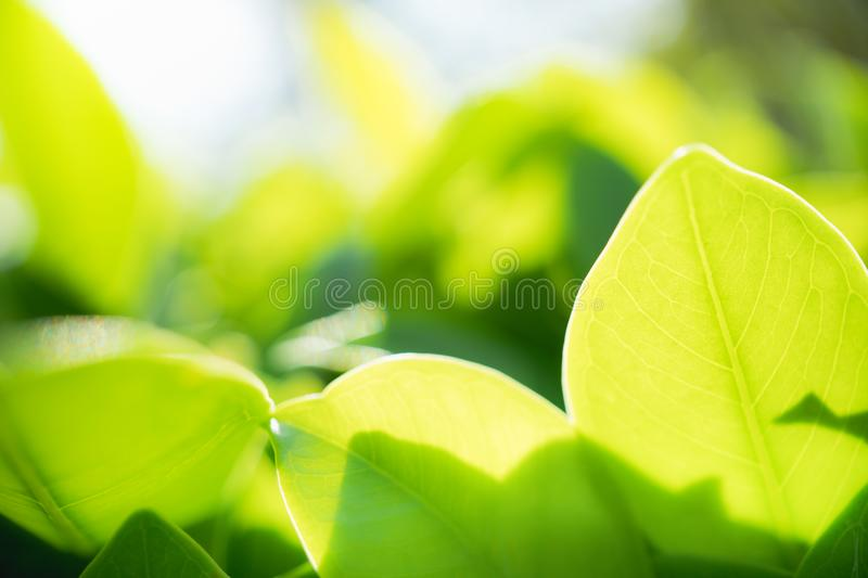 Abstract blurred green leaf in park, natural green plants royalty free stock images