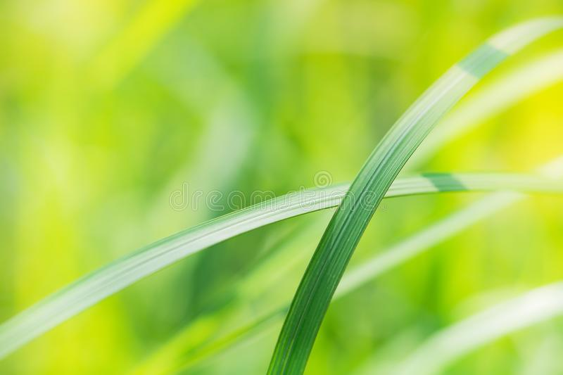 Abstract blurred of green leaf on sunlight stock photo