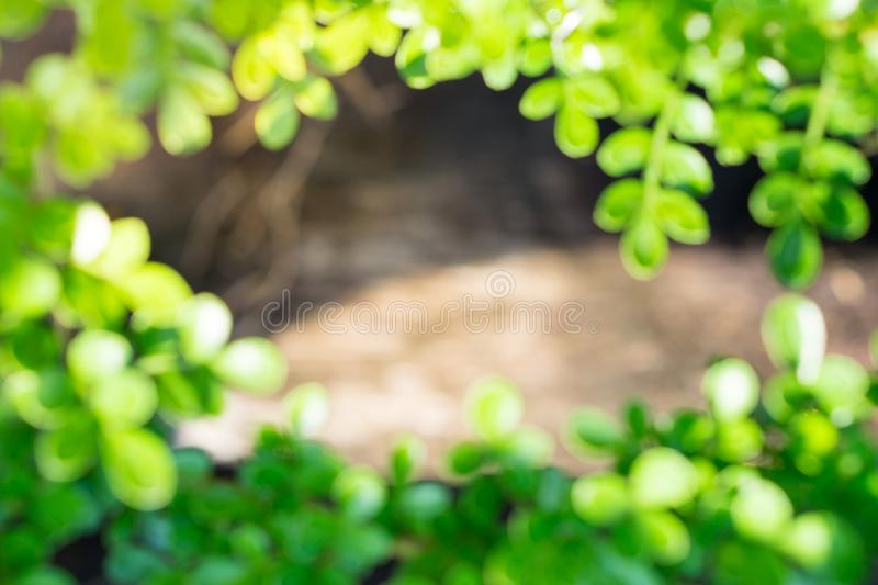 Abstract blurred green nature frame background royalty free stock photos