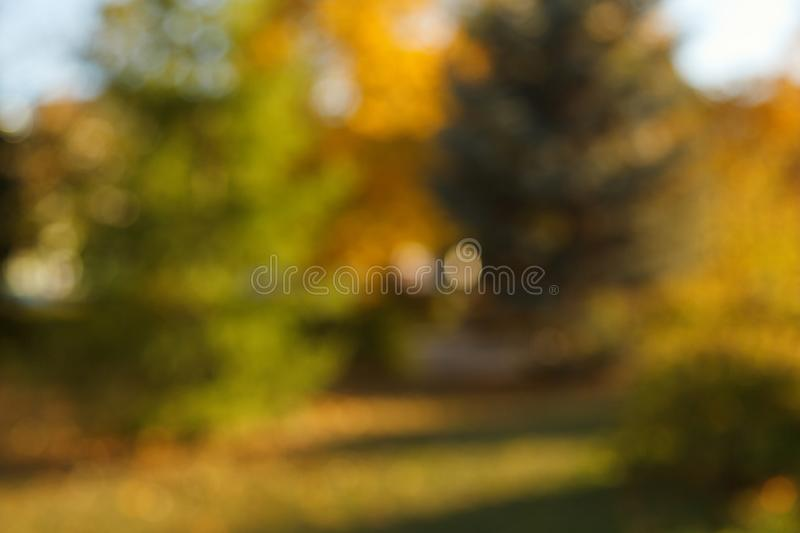 Abstract blurred nature background. Forest trees, Sunny day, sun glare, bokeh. Defocused backdrop for your design.  royalty free stock photos