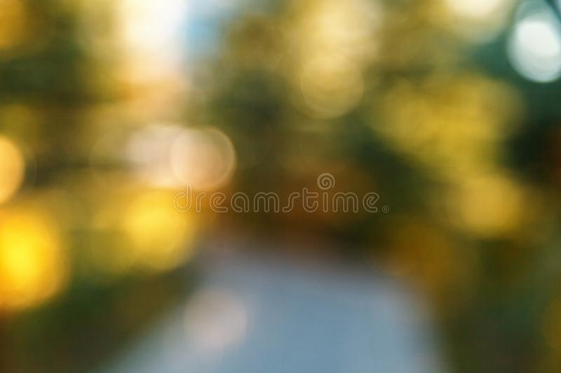Abstract blurred nature background. Forest trees, Sunny day, sun glare, bokeh. Defocused backdrop for your design.  stock image