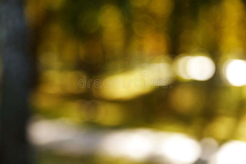 Abstract blurred nature background. Forest trees, Sunny day, sun glare, bokeh. Defocused backdrop for your design.  stock photography