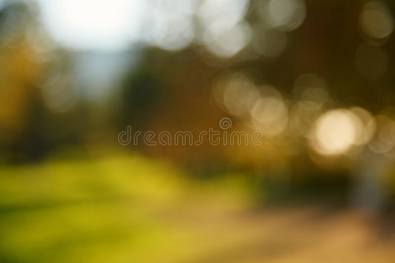 Abstract blurred nature background. Forest trees, Sunny day, sun glare, bokeh. Defocused backdrop for your design.  royalty free stock photography