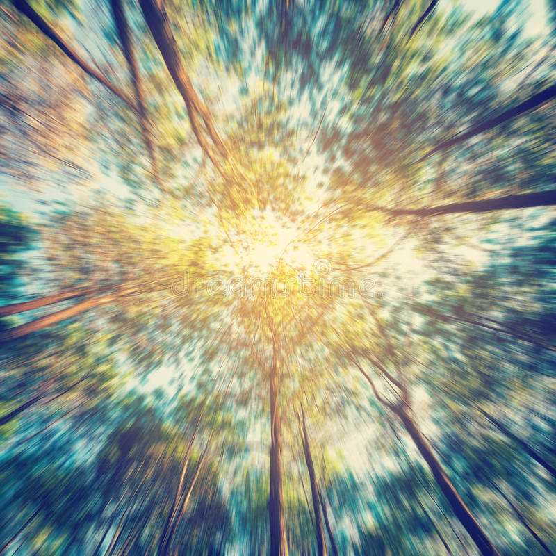 Abstract blurred pine tree forest with sunlight and shadows stock photos