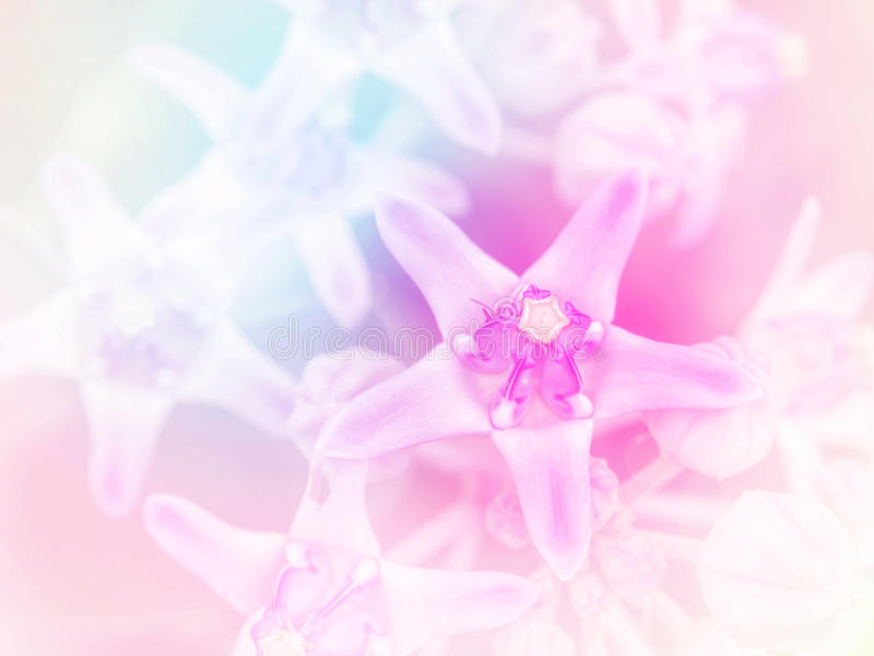 Abstract Blurry crown flower colorful background. Beautiful flowers made with colorful filters royalty free stock photos
