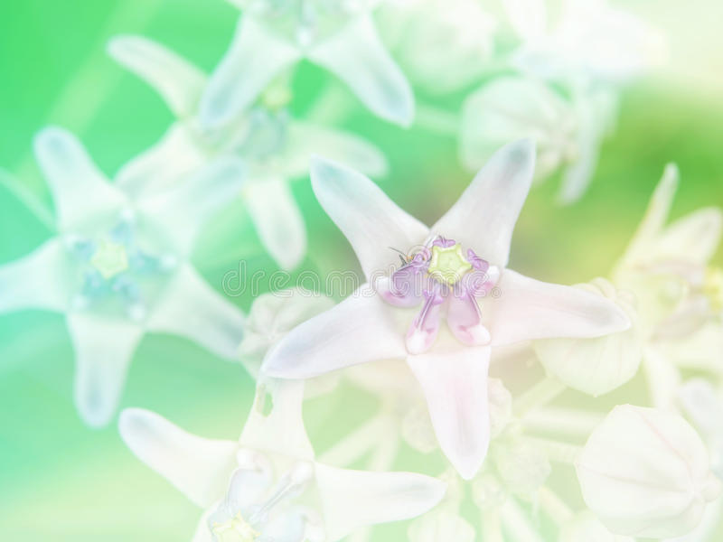 Abstract Blurry crown flower colorful background. Beautiful flowers made with colorful filters royalty free stock images