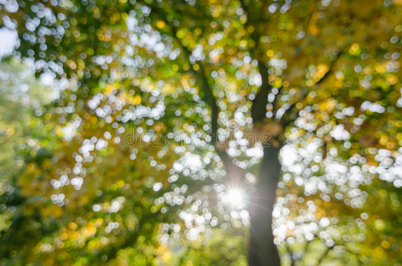 Abstract, bokeh of tree background stock images