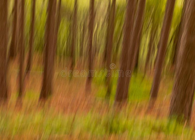 Abstract bos in motieonduidelijk beeld stock afbeeldingen