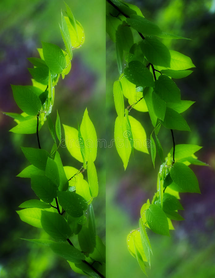 Abstract Branches. An abstract design of green leaves on a tree branch stock photography