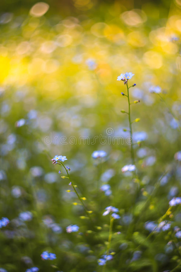 Abstract bright blurred background with spring and summer with small blue flowers and plants. With beautiful bokeh in the sunlight royalty free stock image