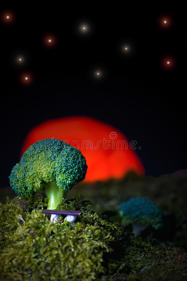 Abstract Broccoli royalty free stock images