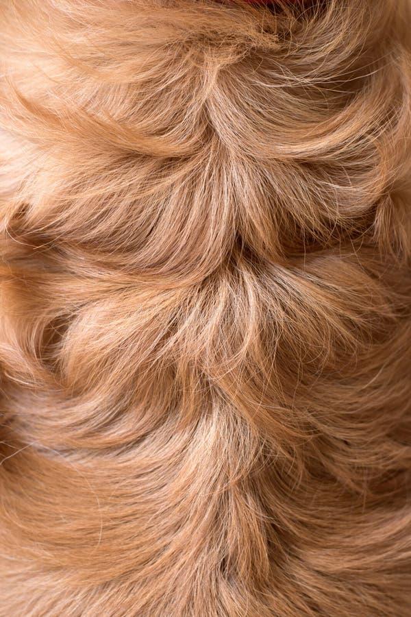 Abstract brown fake animal fur texture. stock image