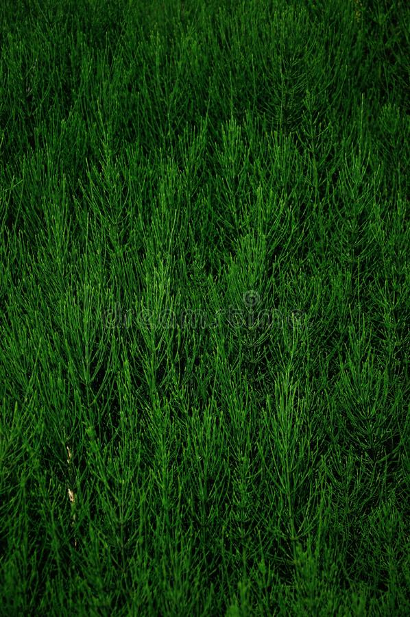 Abstract bush in green background stock photography