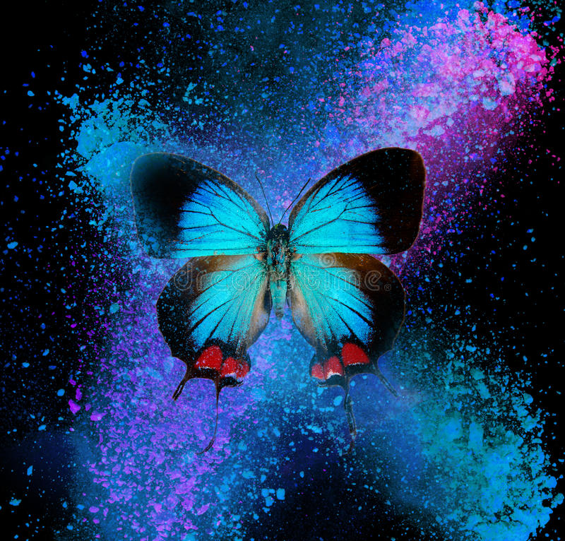 Free Abstract Butterfly Royalty Free Stock Photography - 32297307